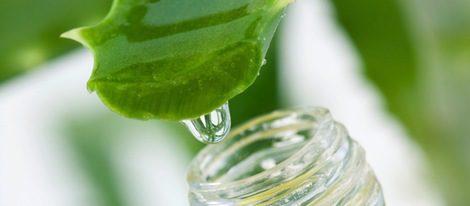 Aloe vera, la planta milagrosa para tu belleza