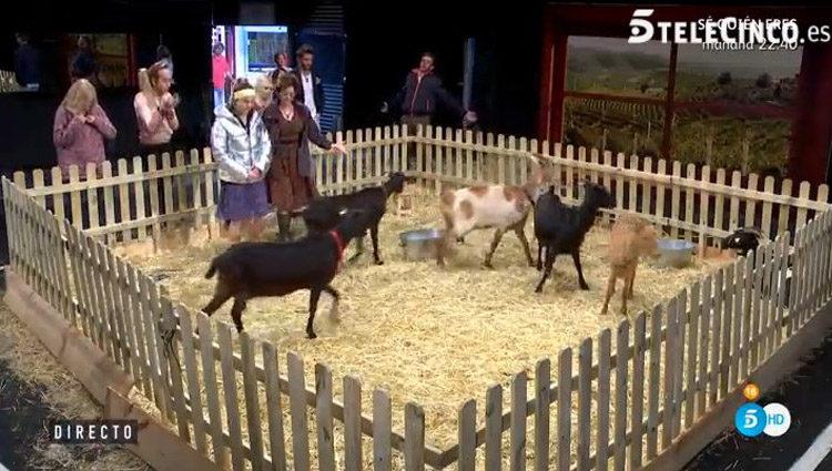 Los concursantes se despiden de los animales de la prueba semanal | telecinco.es