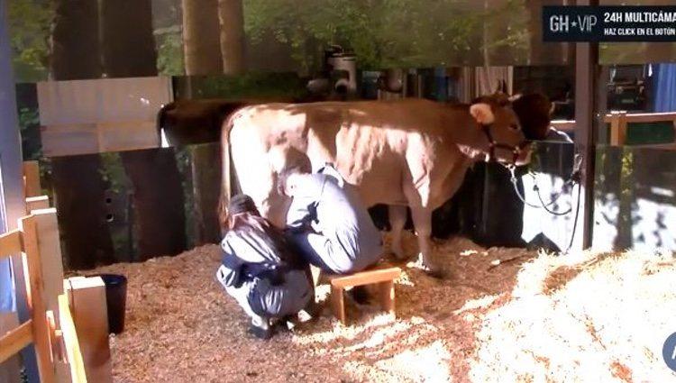 Aurah Ruiz y Suso ordeñando la vaca / Foto: telecinco.es