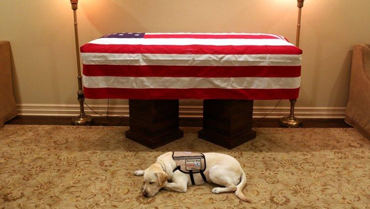 Sully el perro del ex Presidente junto a su ataúd |Foto: Twitter
