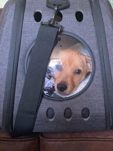 Boby, el perrito que han adoptado Álex Lequio y su novia/ Foto: Twitter