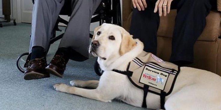 Sully, el labrador que ha seguido acompañado a su dueño George H. W. Bush junto al ataúd