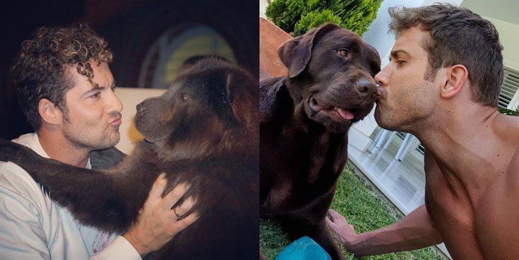 David Bisbal, Pablo Alborán... Así son los perros más entrañables de las celebrities