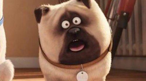 'Mascotas' arrasa en las taquillas y se convierte en el mejor estreno de una película original en la historia de Estados Unidos