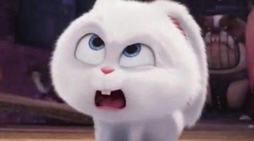 Clip exclusivo de 'Mascotas' con el revoltoso conejito Snowball haciendo de las suyas