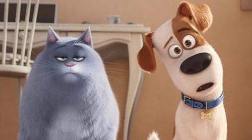 'Mascotas' sigue triunfando en España y continúa como número uno en su tercera semana