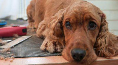 La historia del perro que no se quiso apartar del ataúd de su dueño, muerto en el terremoto de Italia