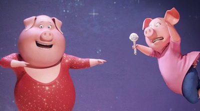 Clip exclusivo de '¡Canta!' con un simpático dúo de cerditos