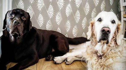 El amor de Lara Álvarez y Román Mosteiro convierte en 'socios' a sus perros Choco y Golfo