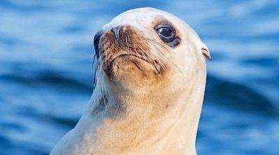 Un león marino ataca a una niña y le arrastra al agua en Canadá