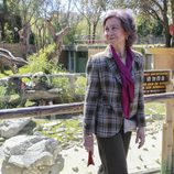La Reina Sofía visita por primera vez a la panda Chulina en el Zoo de Madrid