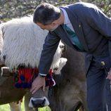 El Rey Felipe acariciando una res vacuna de Poreñu, Pueblo Ejemplar de Asturias 2017