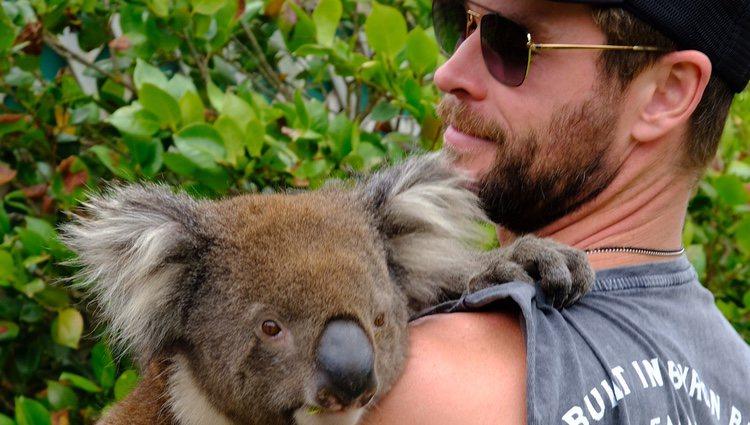 Chris Hemsworth con un koala en Isla Canguro