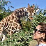Mary de Dinamarca con una jirafa en Knuthenborg Safari Park
