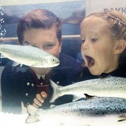 Josefina de Dinamarca abre la boca al ver un pez en la fábrica de salmón de Islas Feroe