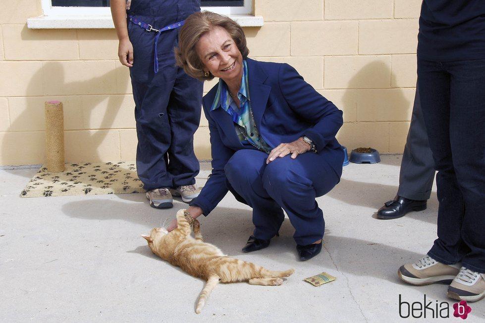 La Reina Sofía con un gato