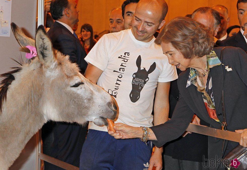 La Reina Sofía dando de comer a un burro