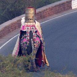Elefante usado por Nick Jonas para llegar a su boda
