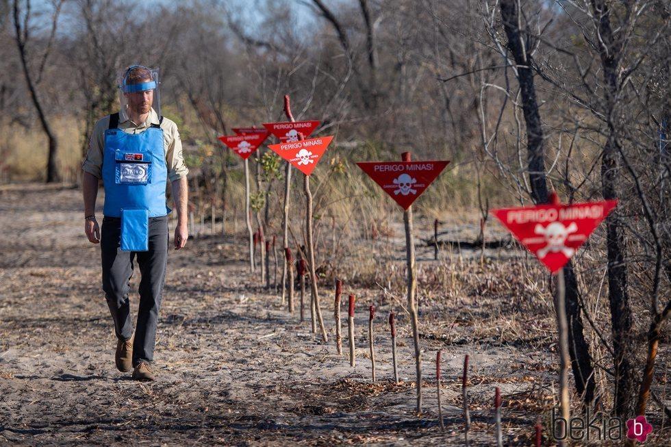 El Príncipe Harry caminando por un campo en el que hubo minas antipersona en Angola