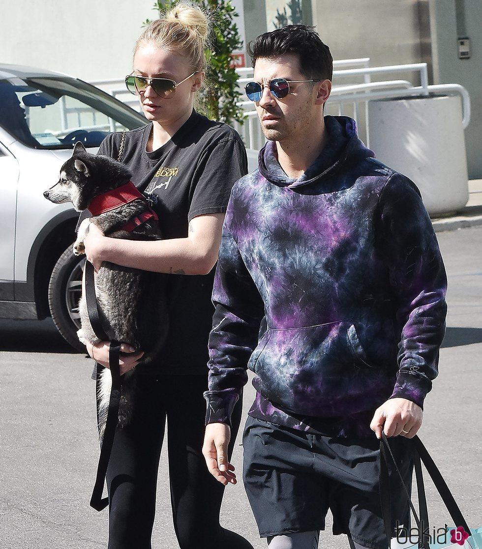 Joe Jonas y Sophie Turner pasean con su perro cogido en brazos