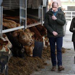El Príncipe Guillermo y Kate Middleton en una granja en su visita oficial a Irlanda