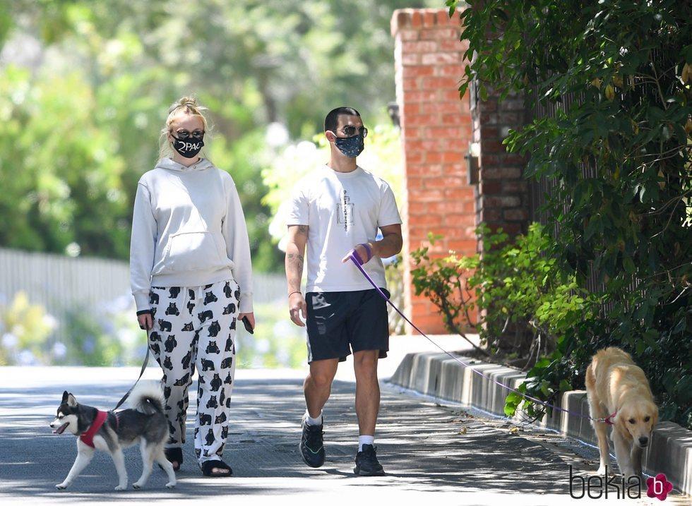 Sophie Turner y Joe Jonas pasean a los perros en la recta final del embarazo