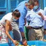 Los Reyes Felipe y Letizia observando la recolección de una cooperativa hortofrutícola en Cieza