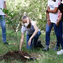 La Princesa Leonor plantando un árbol en el acto del programa europeo #UNÁRBOLPOREUROPA en el Hayedo de Montejo