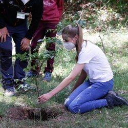la Infanta Sofía plantando un árbol en el acto del programa europeo #UNÁRBOLPOREUROPA en el Hayedo de Montejo