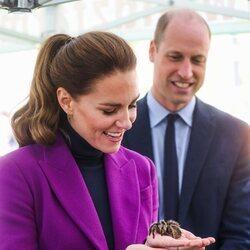 Kate Middleton con la tarántula Charlotte en Irlanda del Norte
