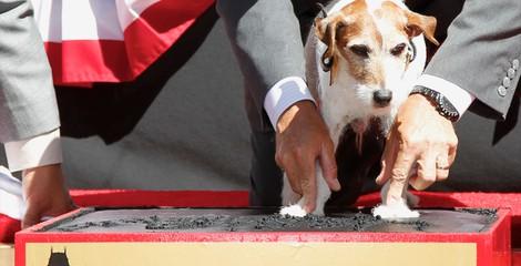 Uggie, el perro de 'The Artist', deja sus huellas en el Teatro Chino de Los Ángeles