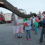 Christian e Isabel de Dinamarca dan de comer a un elefante en el circo