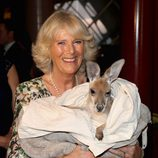La Duquesa de Cornualles con un canguro en Australia