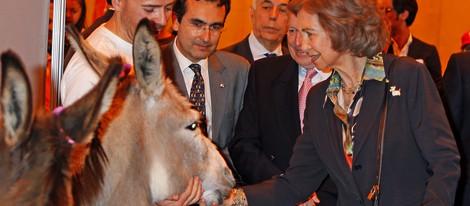 La Reina Sofía acariciando a un burro en la Exposición Internacional Canina de Primavera