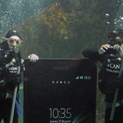 Raquel Sánchez Silva y Maxi Iglesias nadando con tiburones en el zoo de Madrid