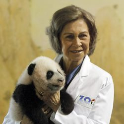 La Reina Sofía sostiene a una cría de panda en el Zoo de Madrid