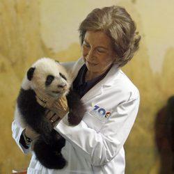La Reina Sofía con una cría de oso panda en el Zoo de Madrid