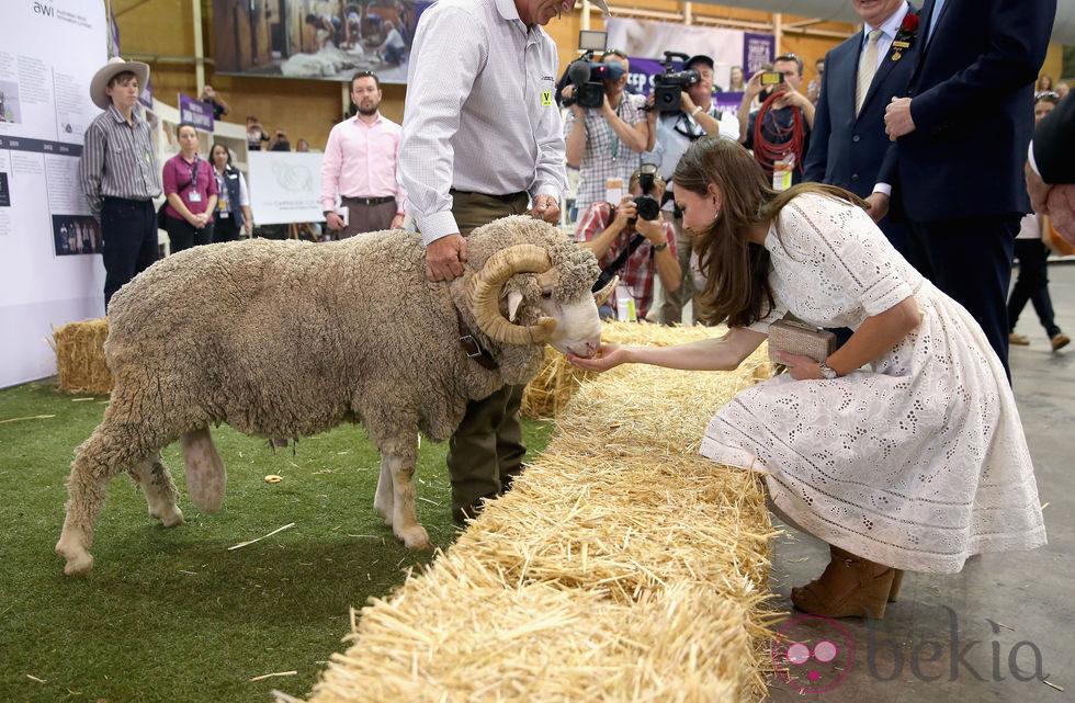 Kate Middleton acaricia un carnero en una feria agrícola en Sydney