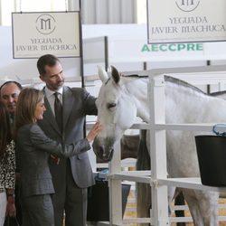 Los Reyes Felipe y Letizia acarician a un caballo en Zafra