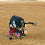 Fran Rivera, corneado por un toro en Huesca