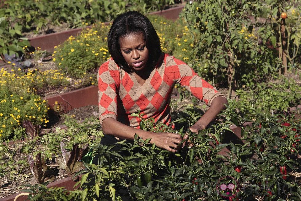 Michelle Obama recoge la cosecha de la huerta de la Casa Blanca