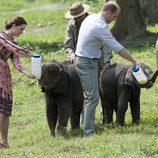 Los Duques de Cambridge dan el biberón a unos elefantes en La India