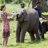 Kate Middleton da el biberón a un cachorro de elefante en La India