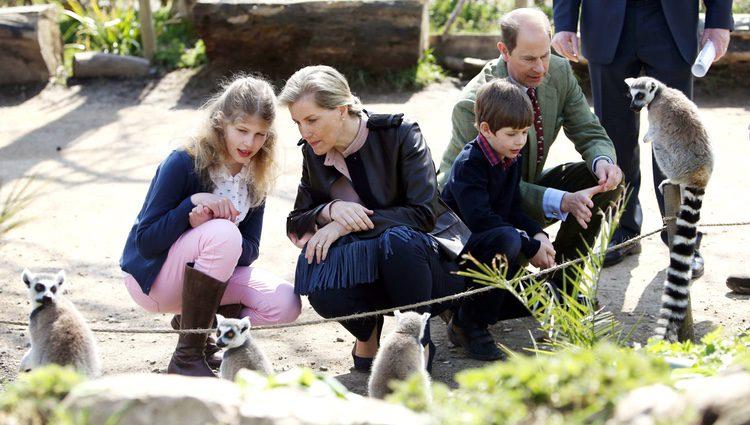 Los Condes de Wessex con sus hijos Louise y James en el zoo de Bristol