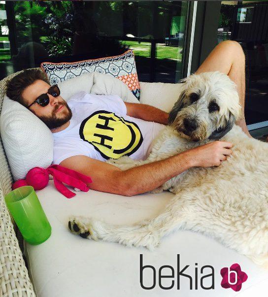 Liam Hemsworth se relaja junto a su perrita Dora